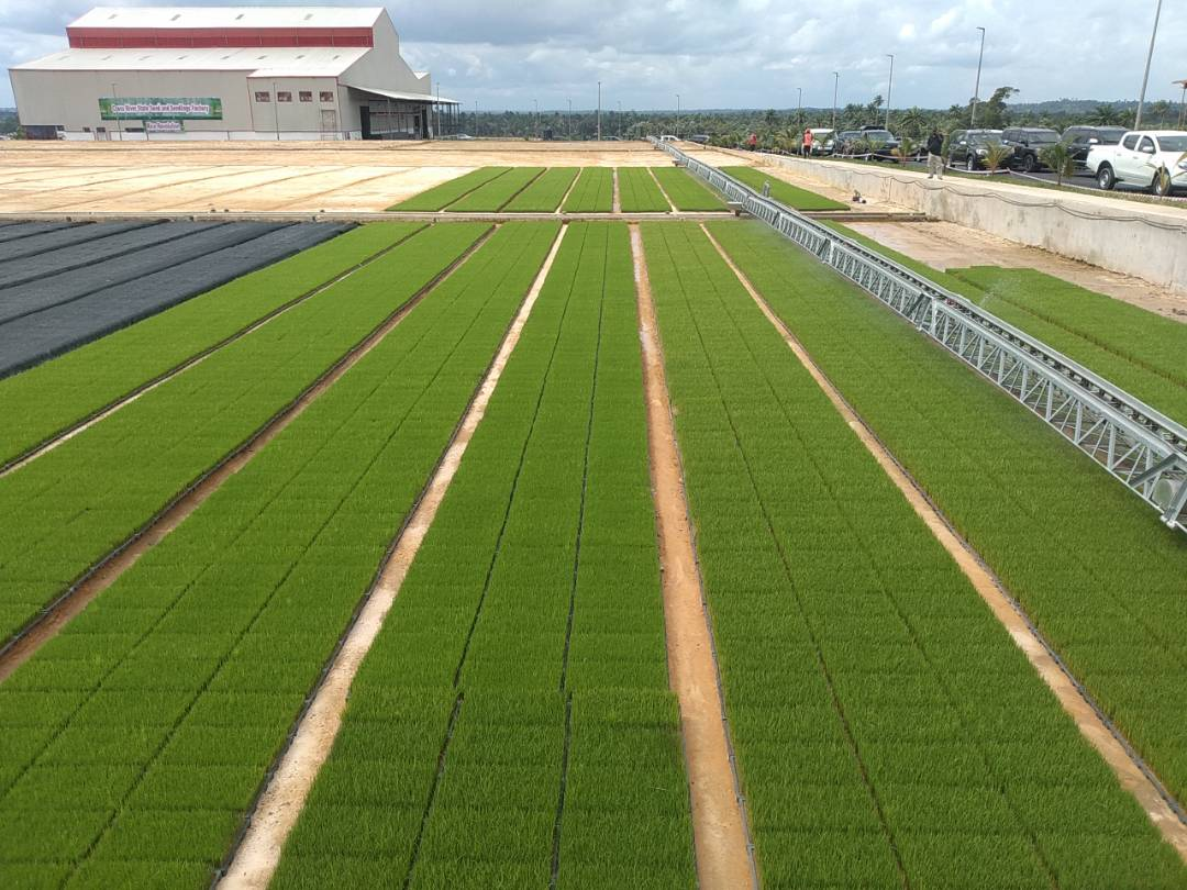 Cross River Rice Seedling Factory commences full production after presidential inauguration